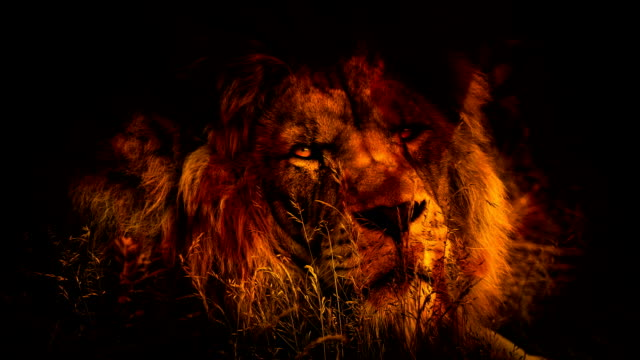 Lion Turns Around In Fire Abstract video