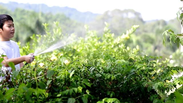 Little Asian boy watering the tree video
