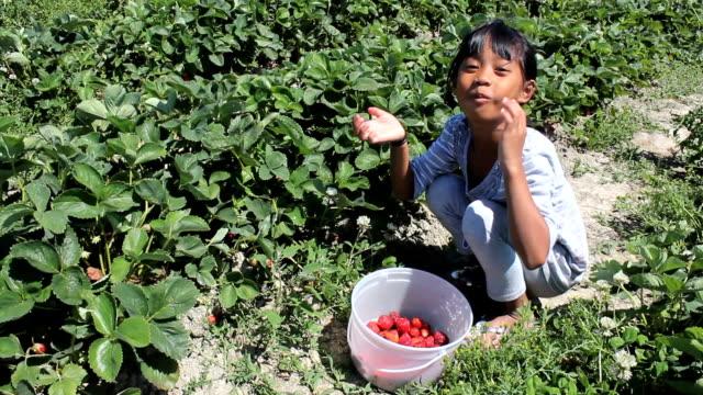 Little Asian Girl Eats Freshly Picked Strawberry video