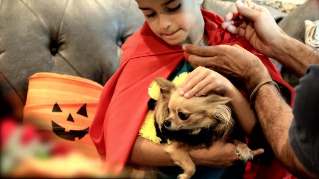Little boy and his dog dress up for Halloween with dad's help. video