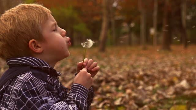 Little boy Blowing Dandelion video