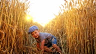 SLO MO Little boy crawling among wheat ears video