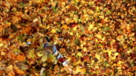 CRANE SHOT: Little boy having fun with autumn leaves video