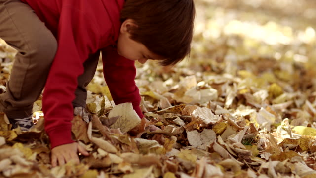 Little boy having fun with autumn leaves video