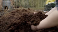 A Little Boy Holds Up Some Fresh Compost In A Veggie Patch video