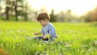 Little boy in daisy field on sunset video