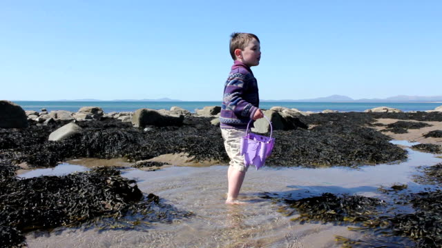 Little Boy On A Tidal Pool Beach With His Bucket video