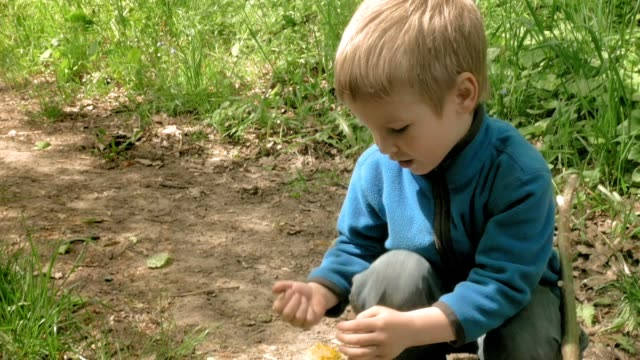 Little boy plays with flower in forest and smiles video