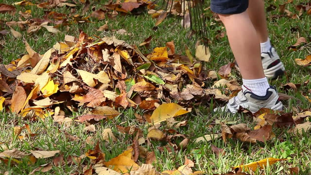 Little Boy Raking Leaves video