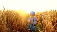 SLO MO Little boy running among wheat ears video