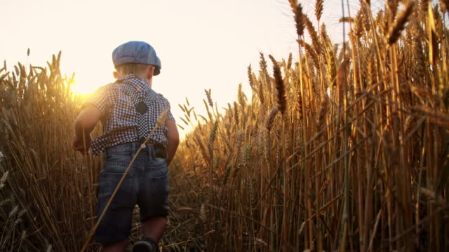 SLO MO Little boy running in the wheat video