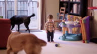 Little boy throws his sippy cup on the floor after a dog licks it, and walks through the living room video