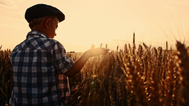 SLO MO Little boy touching wheat ears video