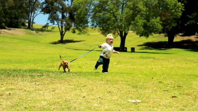 little boy walks dog video