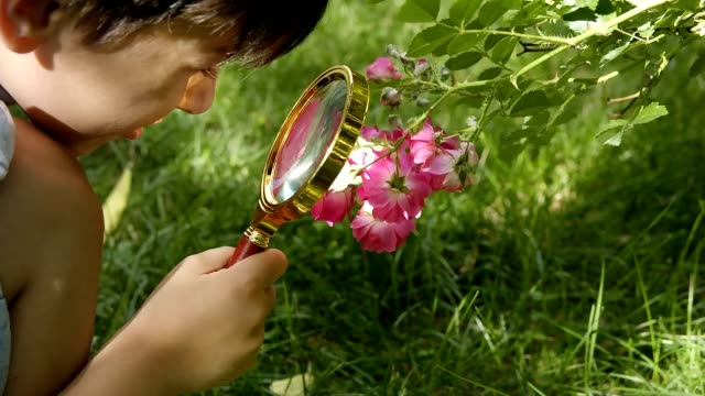 Little boy with a loupe looking at flowers - Stock Video video