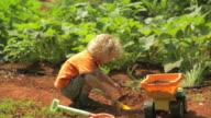 Little Boy Working video