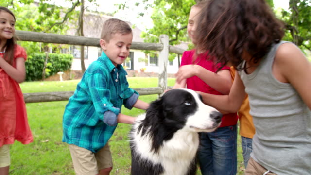 Little boys playing with a Border Collie dog in park video