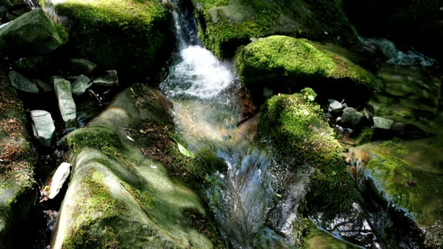 Little brook in woodland in spring video