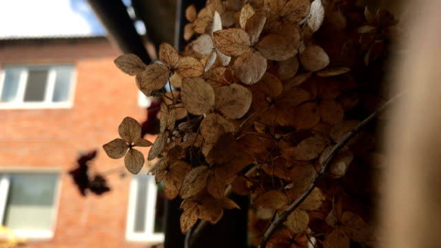 Little Brown dry leaves on the street video