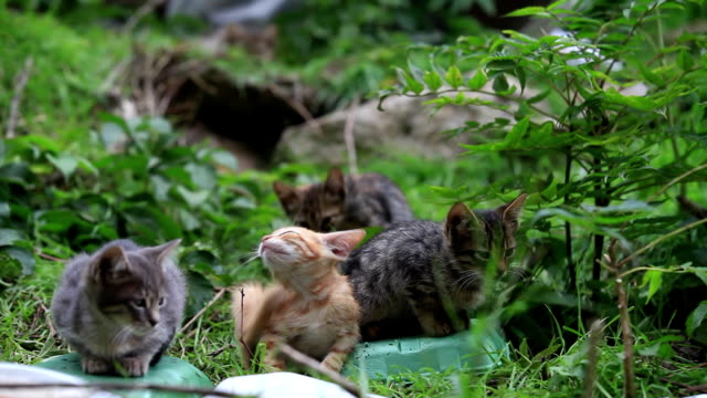 Little cats in Nature video
