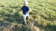Little child goes on green grass at the field at sunny day. Baby walking at the lawn outdoor. Toddler learning to walk in nature. Happy boy on a summer meadow. Rear back view. Close up. video