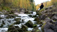 Little cute girl playing on the shore of the forest stream. video