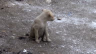 little dirty  dog doggy on sacred Ganges river coast, India video