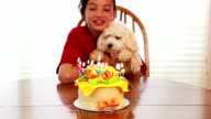 Little girl and pet blowing out birthday candles video