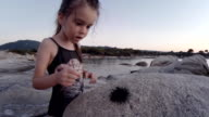 Little Girl And Sea Urchin at the Beach. Learning Process. video