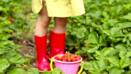 little girl collects strawberries video