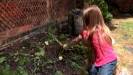 Little girl digs up homegrown carrots video