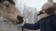 Little Girl Feeding Horses video