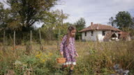 A Little Girl Pick Potatoes. Real People, Rural Scene, Unusual Angle. video