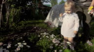 Little girl picks daises on the garden video