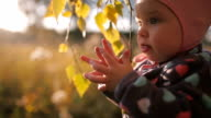 Little girl playing with autumn leaves and smiling. video