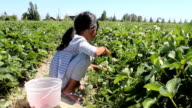 Little Girl Searches For Strawberries video
