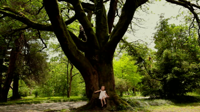Little girl sits on huge fairy tree covered with moss video