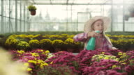 Little girl spraying flowers video