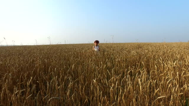 Little girl stands on a wheat field. The camera zooms in to the child. Wheat turned yellow. video