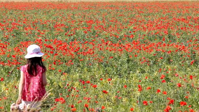 Little girl walking in poppy field video