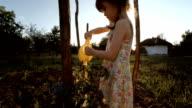 Little Girl Watering Organic Tomatoes,Sunset,Rural Scene. video
