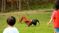HD Little Girls walking in Field. video