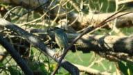 Little Heron video