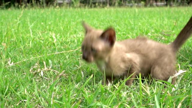 little kitten video