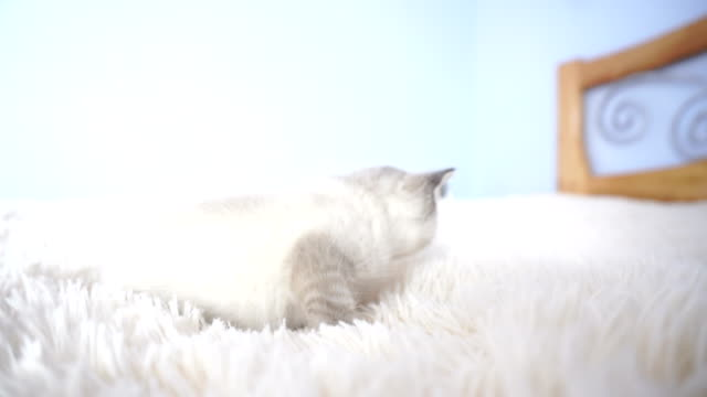 little Kitty in bed video