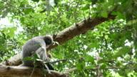 Little monkey in the tree video