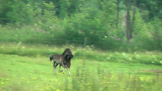 little ponys are running in meadow video