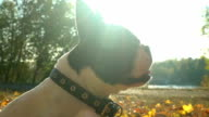 Little puppy enjoy sunny day video