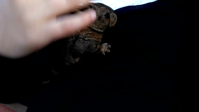 little Rabbit on kids arm. kid care animal. small bunny video