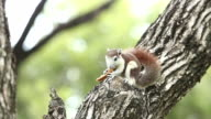 Little squirrel eating bread video